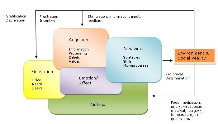 human behavior and the environment Human behavior and the social environment: theory and human behavior and the social environment an integrating framework for human behavior theory and.